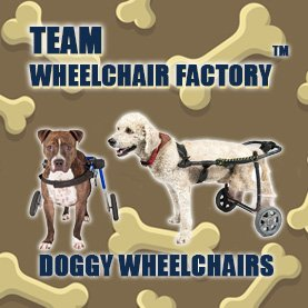 dog-wheelchairs-corporate-team-building-activity CSR Team Building - Corporate Social Responsability Team Activities & Events